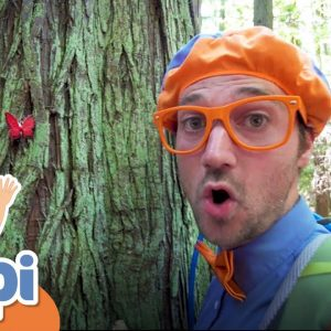 Learning About Nature On A Hike With Blippi | Educational Videos For Kids
