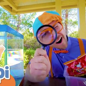Sink or Float with Blippi | Fun Science Experiment for Kids | Educational Videos For Kids