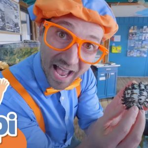 Learning Under Water Animals With Blippi | Educational Videos For Kids