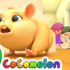 Lost Hamster | CoComelon Nursery Rhymes & Kids Songs