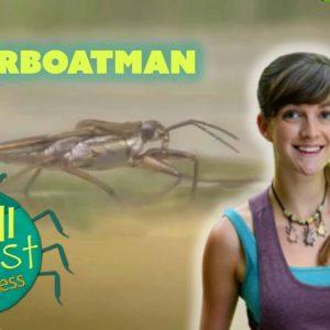Minibeast Adventure with Jess | Spot the Waterboatman | Wizz Explore