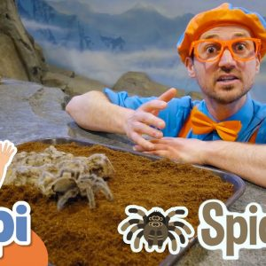 Blippi Visits The Zoo - Learning Animals For Kids | Educational Videos For Children