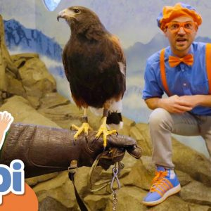 Blippi Feeds And Plays With Animals At The Zoo! | Educational Videos For Kids