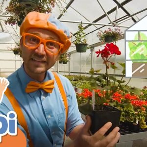 Blippi Visits a Greenhouse | Educational Videos For Kids