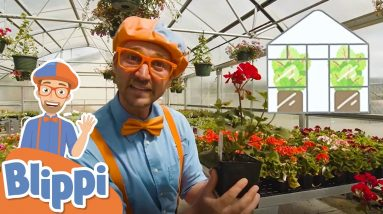 Blippi Visits a Greenhouse   Educational Videos For Kids